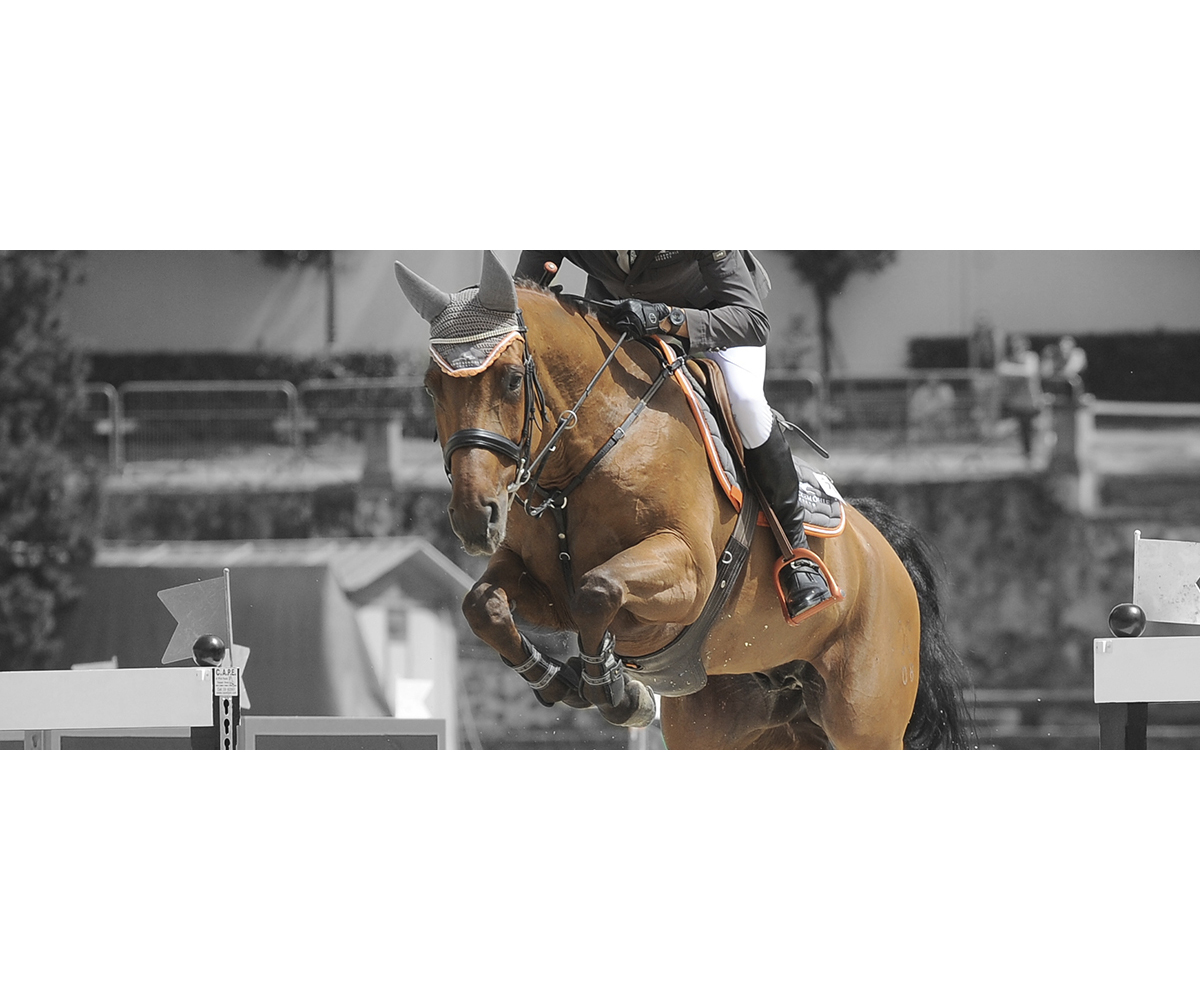 Cavalo home salto